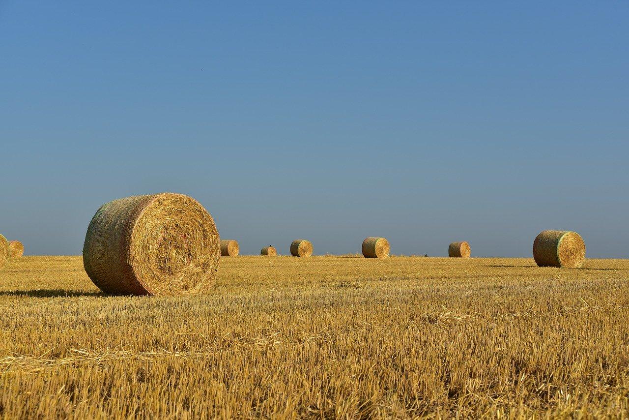 hay, straw bales, hay bales